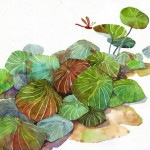 Name : Lotus leaves wrapping/ Technique :Watercolor /size :58x48cm /Price : 235 usd.