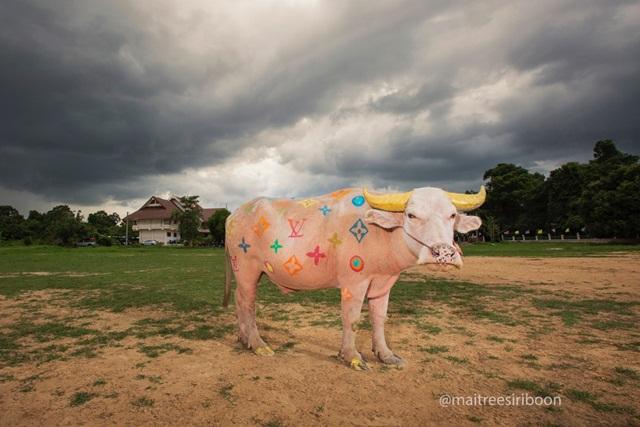 Murakami Buffalo, Photography, 2016_120x80 cm, Edition of 3, _90x60 cm, Edition of 3